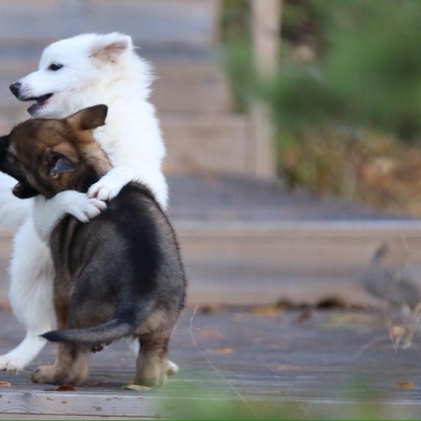 KoiraKikka_eläimet_koira_halaus